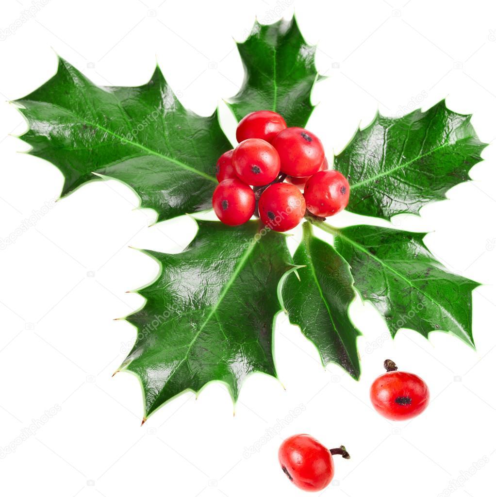 Christmas Mistletoe Decoration Stock Photo Madllen