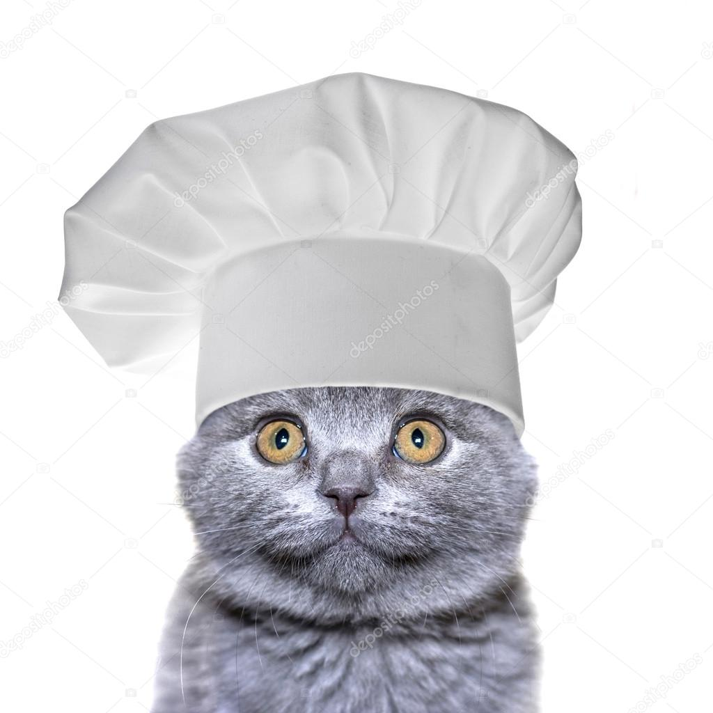 Cute Cat In A Chef S Hat Isolated Stock Photo C Madllen