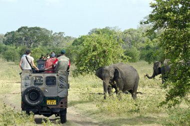 Game drive  in Minneriya national park, Sri Lanka
