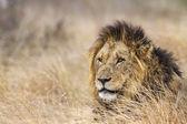 Lev v Kruger National park