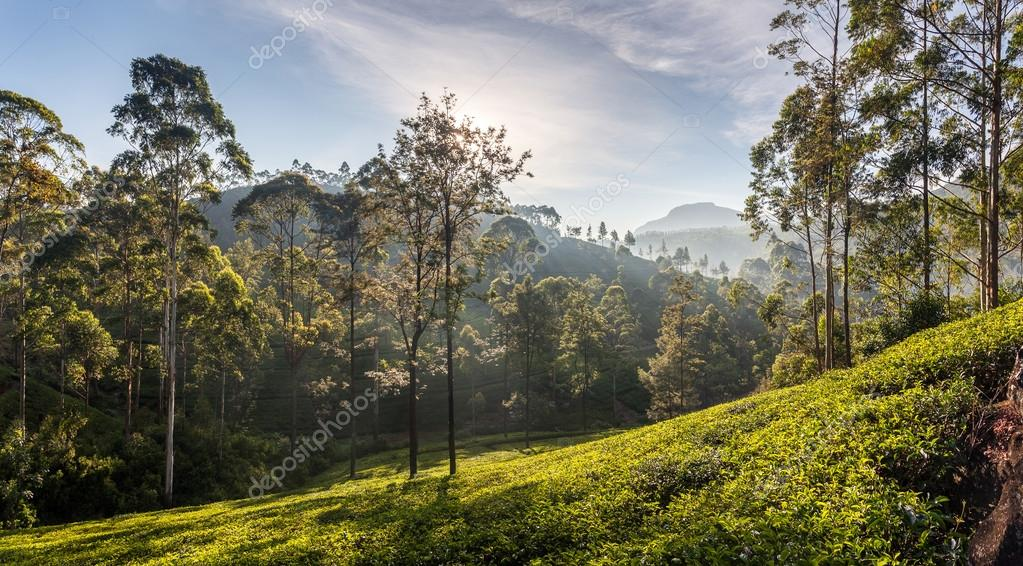 Beautiful panoramic Sri Lanka, Asia