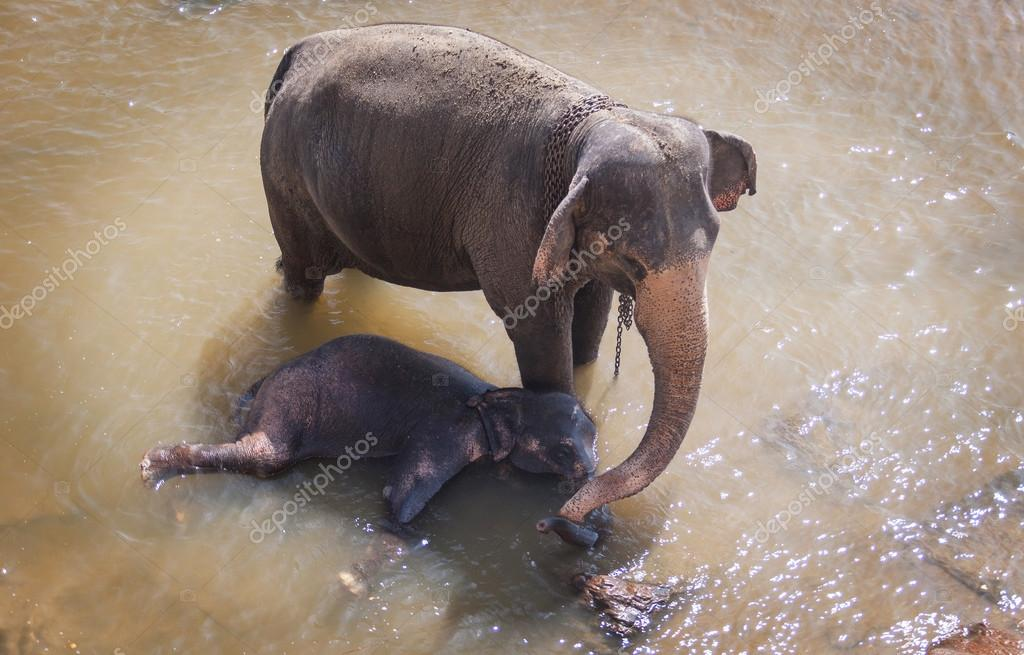 Elephant family take a bath in the river,