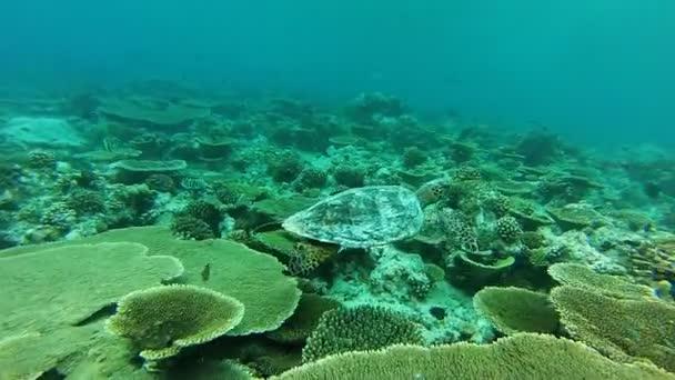 Snorkeling a Maldív-szigetek tengeri teknős