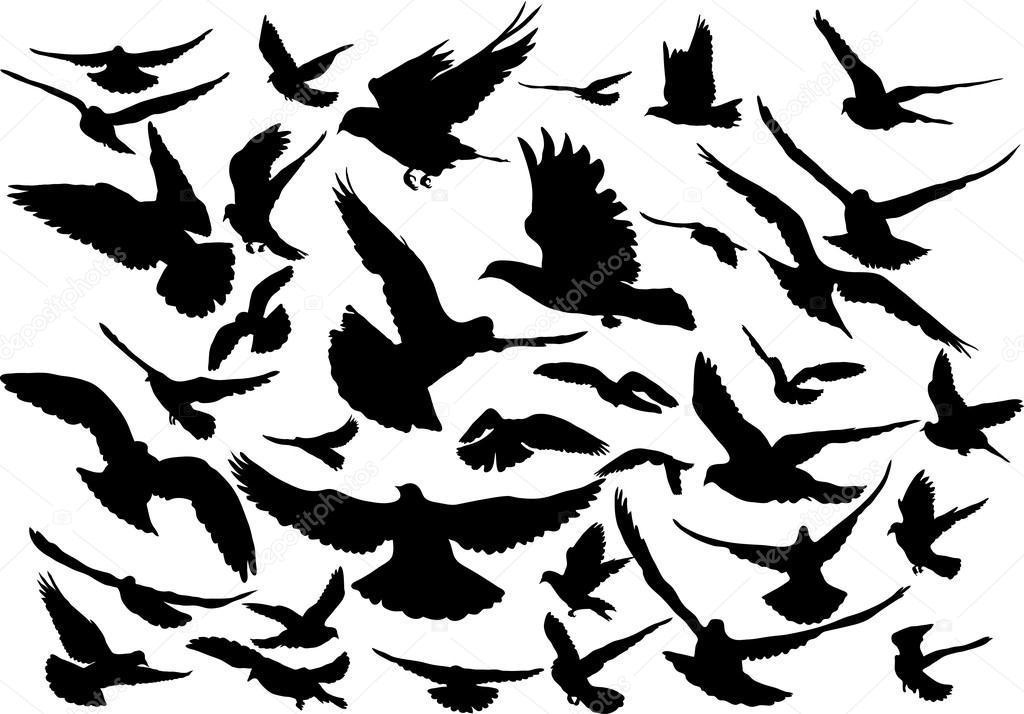 36 空飛ぶ鳥のシルエットのベクター セット \u2014 ストックベクター
