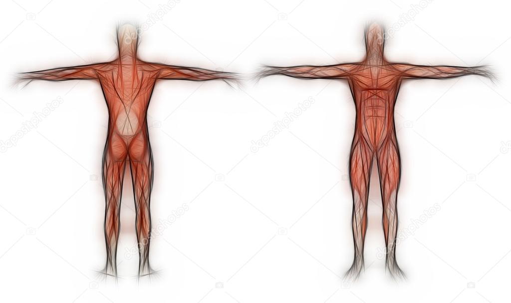 menschliche Anatomie - männliche Muskeln gemacht in 3d software ...