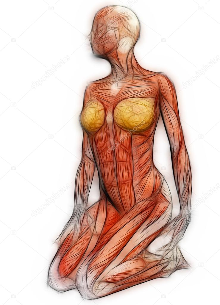 anatomía humana - músculos femeninos realizados en el software 3d ...