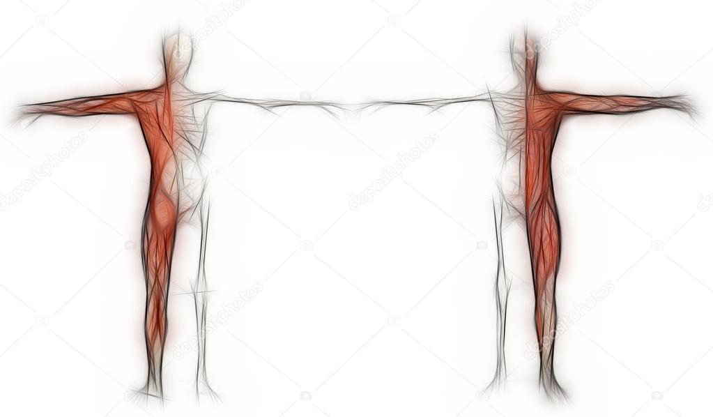 menschlichen Körper eines Mannes mit Muskeln und Skelett gemacht in ...