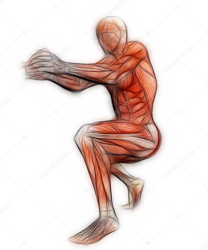 anatomía humana - músculos masculinos en software 3d — Fotos de ...