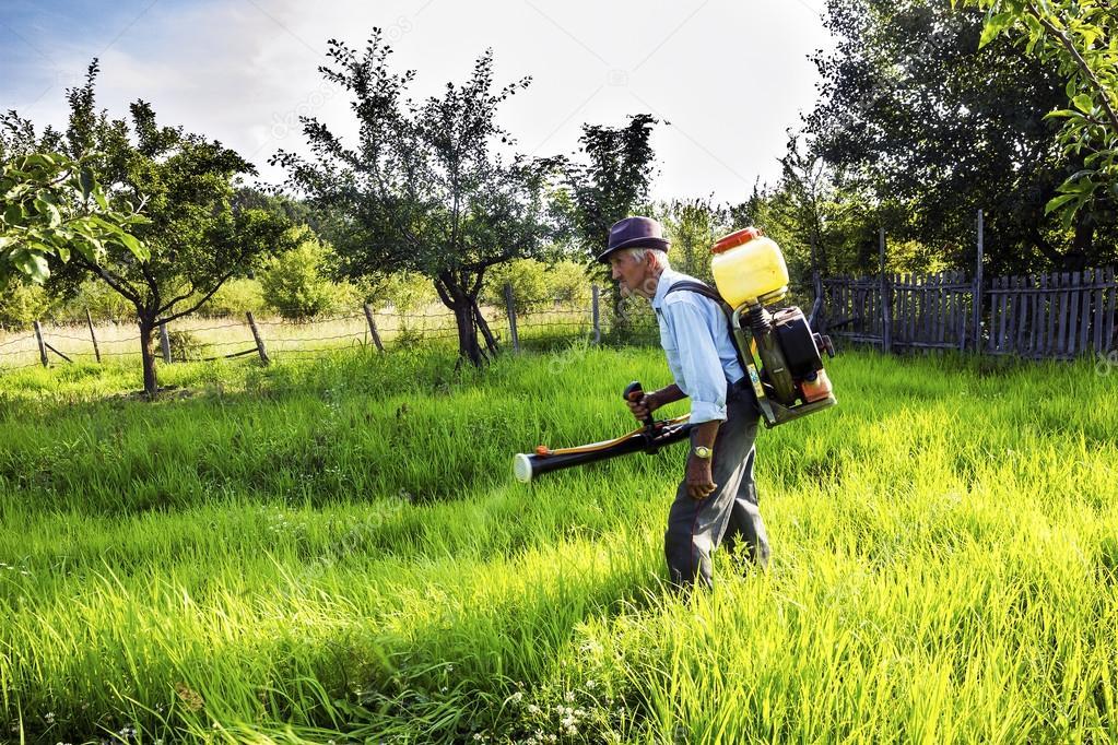 Senior farmer spraying the orchard