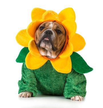 dog dressed like a flower