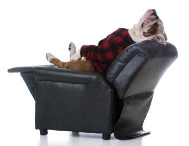 Bulldog stretched back resting