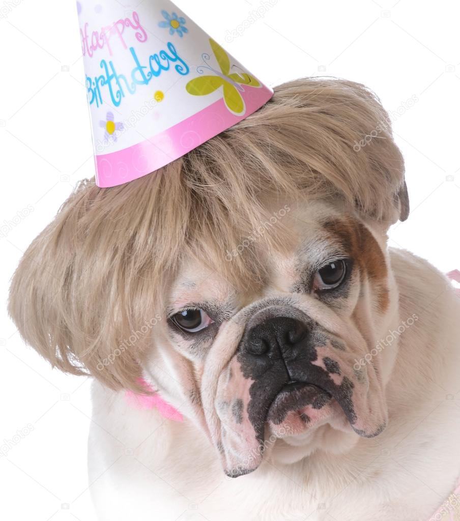 Geburtstag Hund Stockfoto C Willeecole 69966185