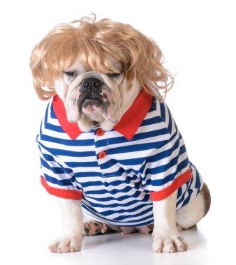 humanized dog
