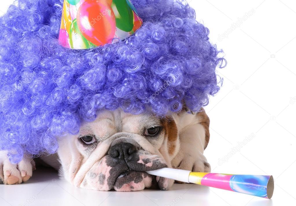 Verjaardag Honden Stockfoto C Willeecole 73514515