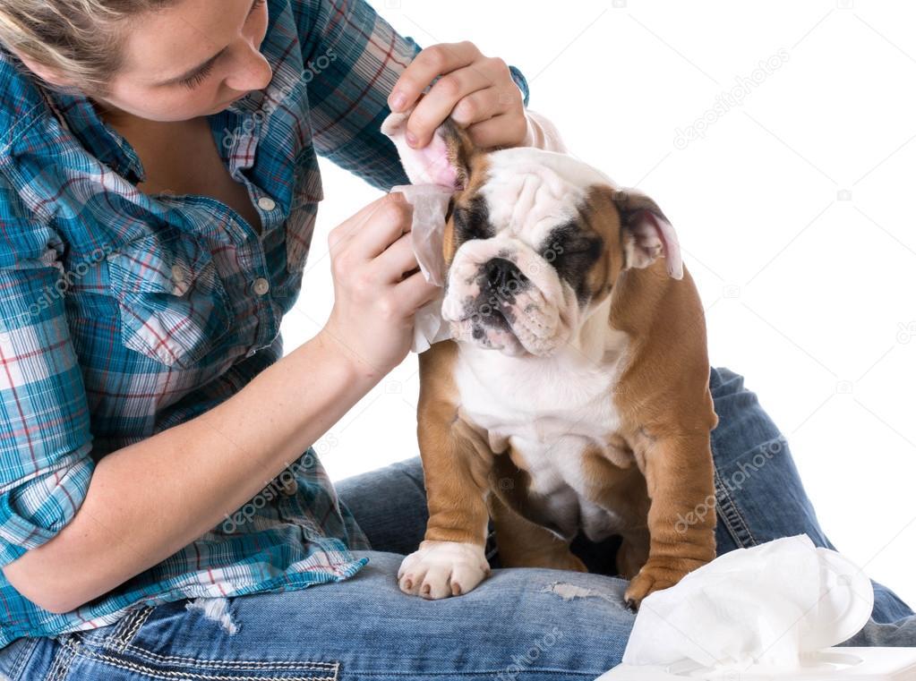 dog ear infection symptoms - 1000×744