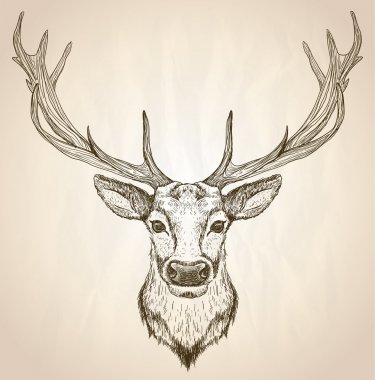 Hand drawn graphic illustration of of a deer head with big antlers.