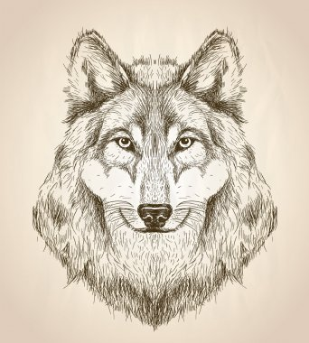 Vector sketch illustration of a wolf head front view.