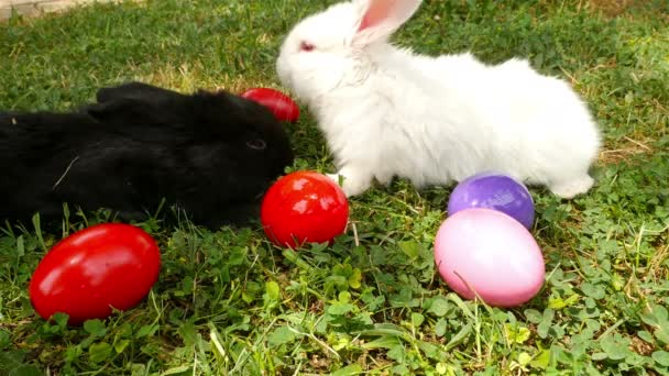 Fluffy white, black and brown rabbits around colorful easter eggs