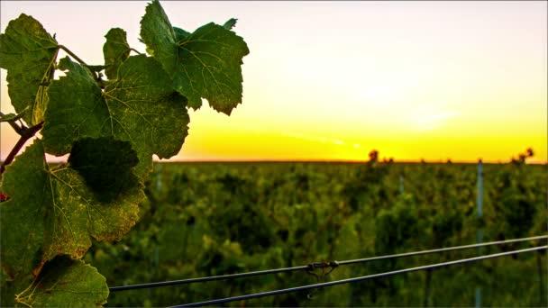 Časová prodleva západu slunce nad vinici valley