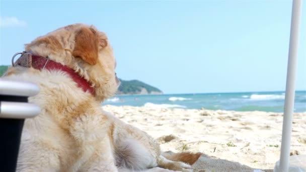 Hund sitzt unter Sonnenschirm am Strand