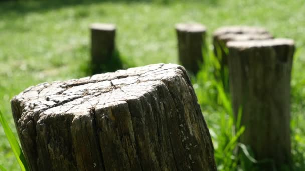 Children balancing on stumps in the nature, feet only