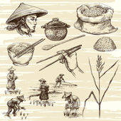 Photo hand drawn illustration, rice harvest