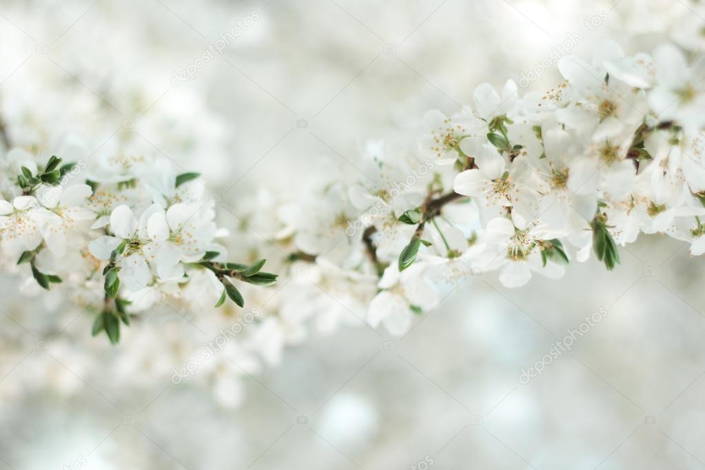 Картинки по запросу белый цвет