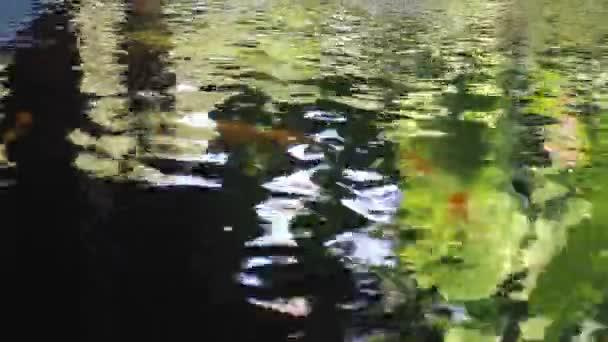 Rybí rybník Koi na zahradě, záběry ze skladu