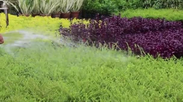 Man watering pot plants in the garden, stock footage