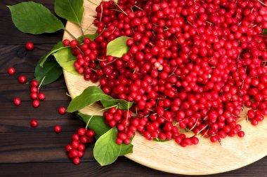 Chinese schizandra - red ripe berries