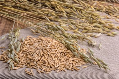 grain oats and ears scattered on the table