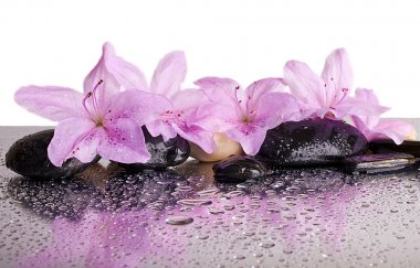 flowers and black stones with reflection