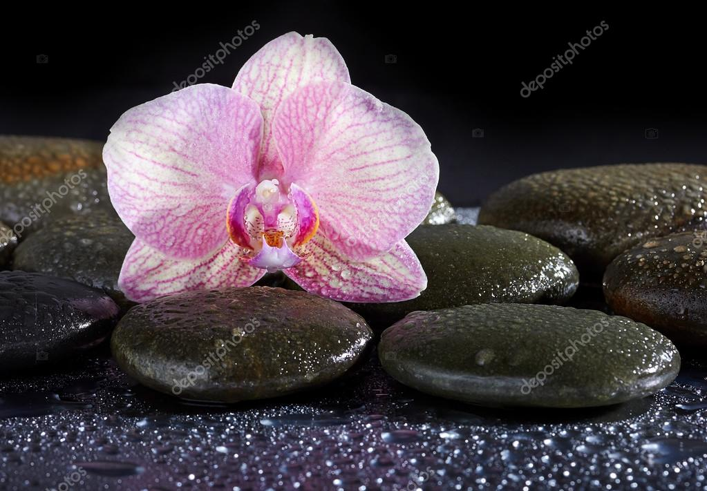 zen basalt stones and orchid on the black
