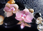 Fotografie Orchid flowers and stones with reflection