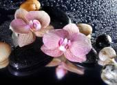 Fotografie Květy orchidejí a kameny s odleskem