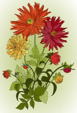 Beautiful flowers of Garden asters