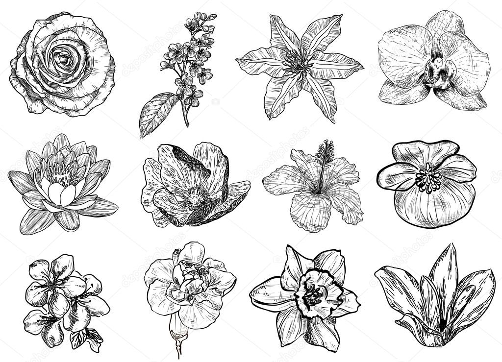 Vector illustration of flowers (black and white)