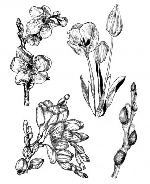 Spring flowers in sketch style: Sakura, Tulip, Freesia and Willo