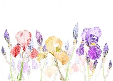 Art Pastel background with Beautiful iris flower