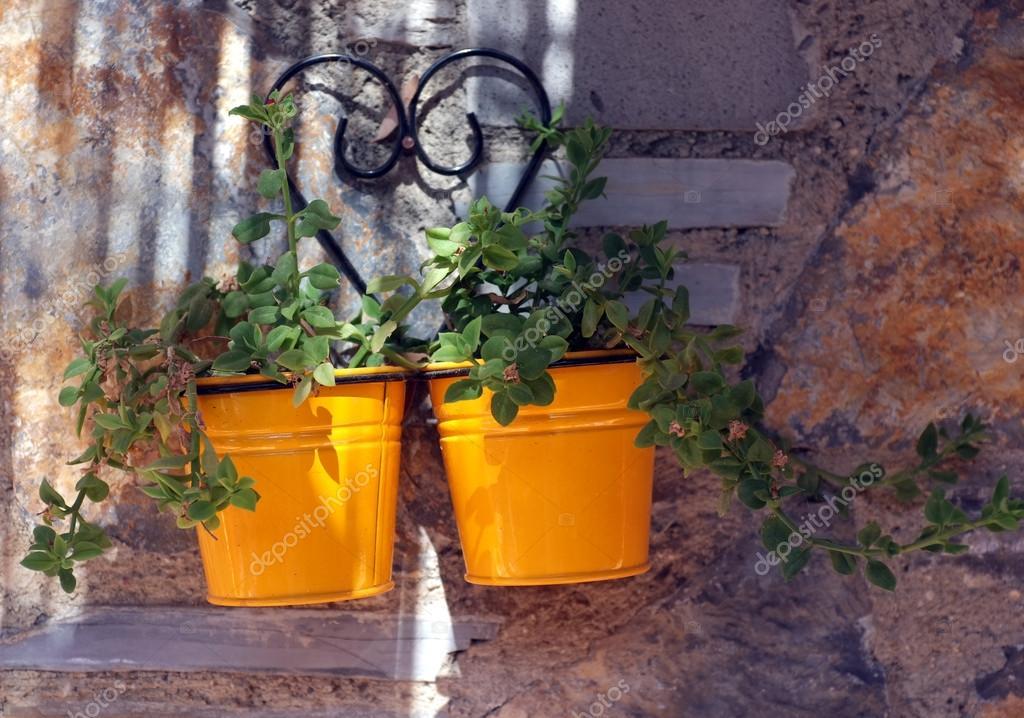 Zinn Gelbe Blumentopfe An Der Wand Stockfoto C Artistan 53729991