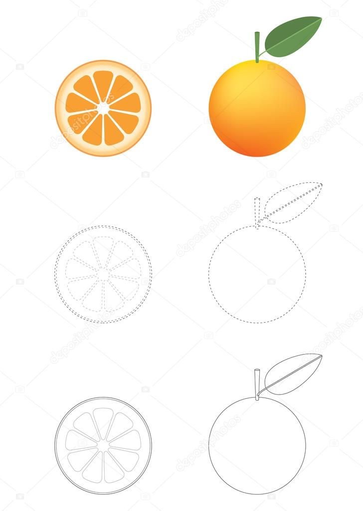 Oranges Coloring Pages Oranges Coloring Pages Stock Vector