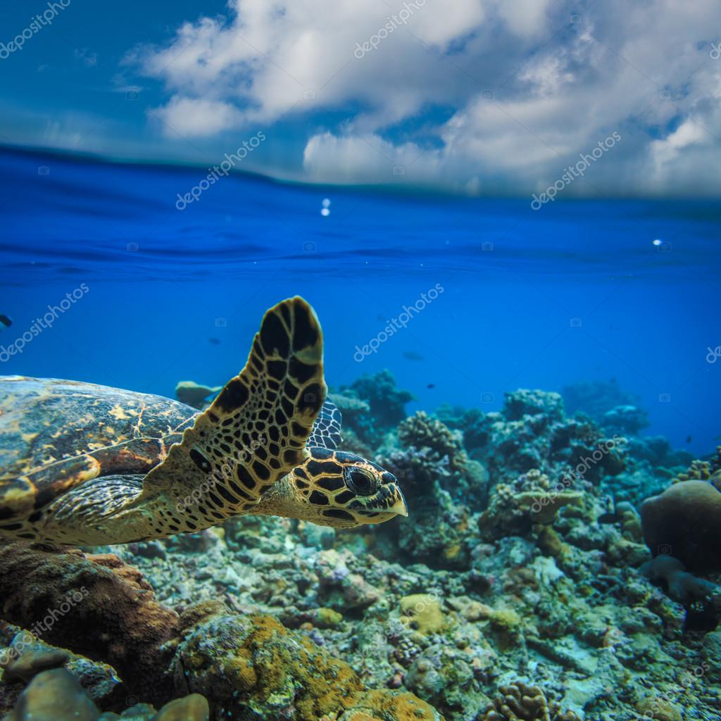 Sea Turtle Underwater in beautiful ocean environment