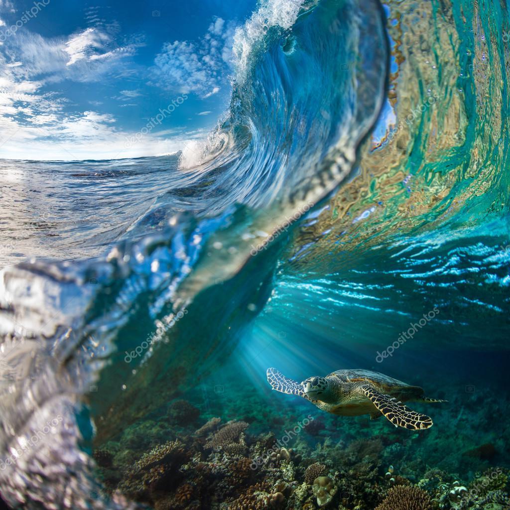 Beautiful Aquatic Postcard. Maldivian and Hawaiian Sea Turtle Floating Up And Over Coral reef. Loggerhead in wild nature habitat — Photo by ...