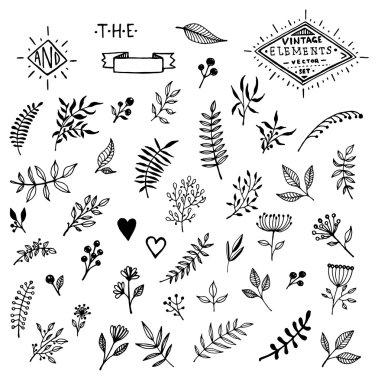Set of Vintage Floral Hand-Sketched Elements.