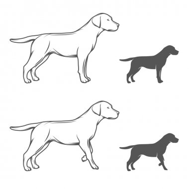 Dog in different poses isolated on white background