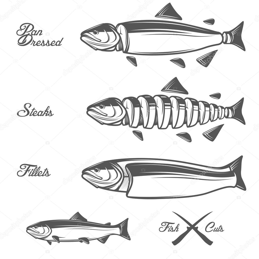 salmon cuts diagram - whole fish, pan dressed, fillets and steaks — stock  vector