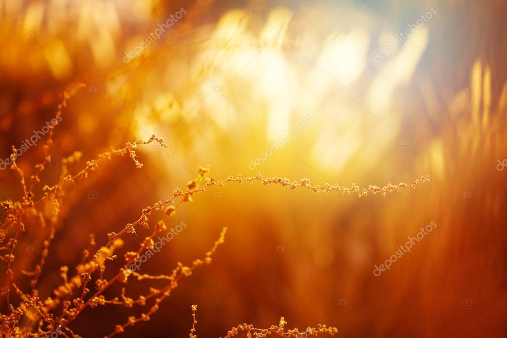 Nature Background with Golden Grass