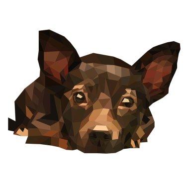 polygonal brown dog