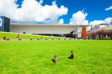Couple of ducks on the Museum Square, the Netherlands.