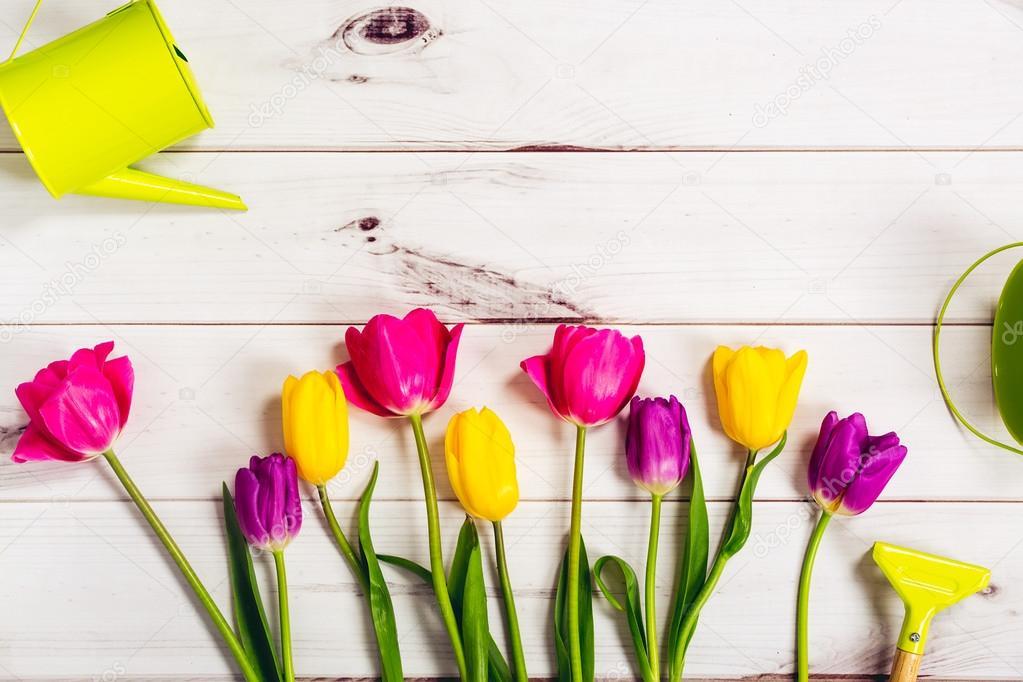 Tulipanes de primavera para colorear sobre fondo de madera claro ...